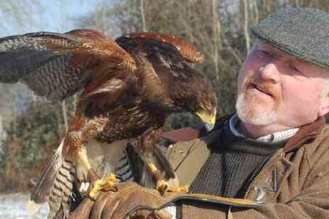 Millets Farm Falconry Centre - Entry to Millets Farm Falconry For Child - Save 0%