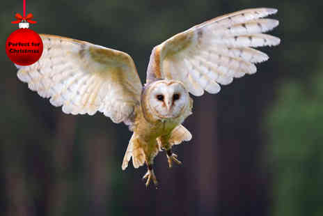 Birds of Prey Centre - Half day owl experience for one including a hot chocolate for 2 - Save 60%