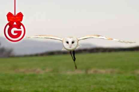 The Coniston Hotel - Owl Encounter or Half Day Falconry Experience - Save 71%