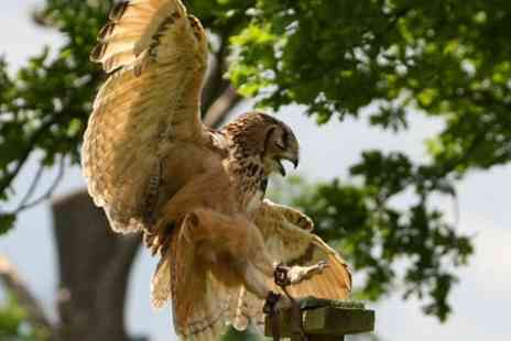 Birds of Prey Centre - African Bird Handling Experience  - Save 79%