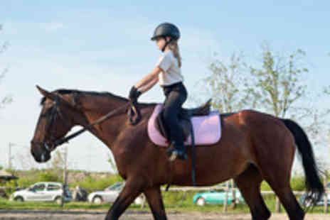 Holly Equestrian Centre - Horse Riding Lesson for One or Two  - Save 58%