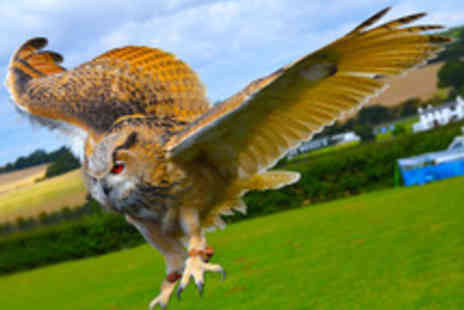 CJ's Birds of Prey - Two Hour Owl, Hawk and Falconry Experience for One  - Save 77%