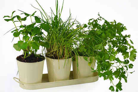 Home wareltd  - Grow Your Own Herbs  Kit, Including Three Pots, Seeds, and a Tray - Save 40%