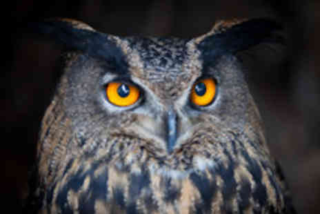 HawksFlight Falconry - Two Hour Owl Handling and Flying Experience - Save 51%