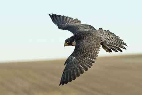 Hawking About -   1½  hour hawk walk for one  - Save 58%