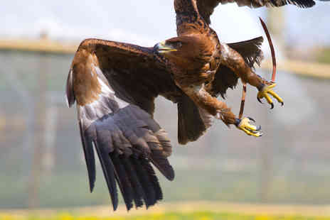 Millets Farm Falconry Centre - Guided tour and birds of prey experience for One  - Save 54%
