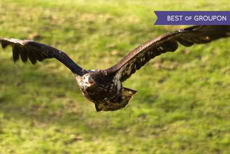 Xtreme Falconry - Bird Flying and Handling Experience  - Save 70%