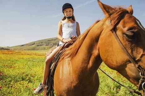 Wern Trekking and Riding Centre -  Two Hour Trek or Hack  Horse Riding   - Save 70%