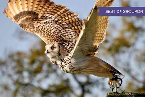 Millets Farm Falconry Centre - Birds of Prey Photography Day - Save 55%