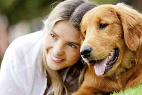 Pet Addict - Online Dog Behaviour and Psychology Course  - Save 90%