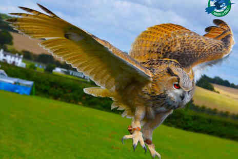 CJ's Birds Of Prey - Birds of Prey Flying and Handling Experience for One - Save 77%