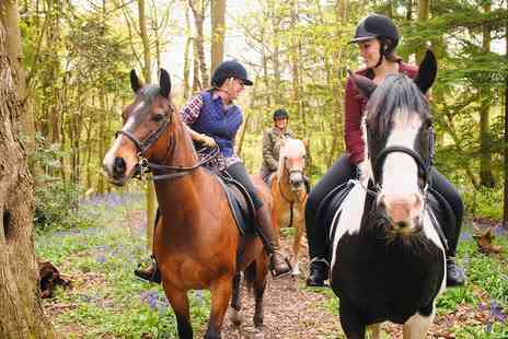 Manor Farm Riding Centre - Horse Riding and Stable Management Lesson - Save 51%