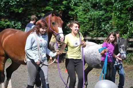 Liberty Horses CIC - One Hour Horse Agility Session For Two - Save 60%