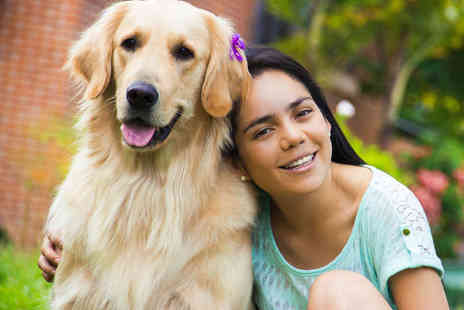 The UK Dog Whisperer - Two Day Dog Behaviour Course - Save 74%