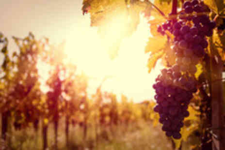 Cottonworth Vineyard - Guided Vineyard Tour and Wine Tasting with Lunch for Two  - Save 47%