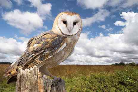 Birds of Prey Centre - Three hour owls and eagles experience for 1 person including a hot drink and slice of cake - Save 77%