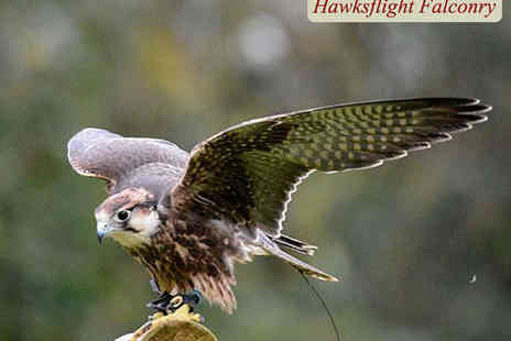 Hawksflight Falconry - Hour Long Birds of Prey or Owl Experience  - Save 52%