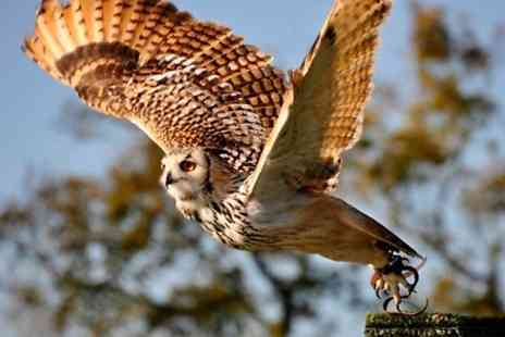 Millets Farm Falconry Centre - Two Hour  Falconry Experience   - Save 80%