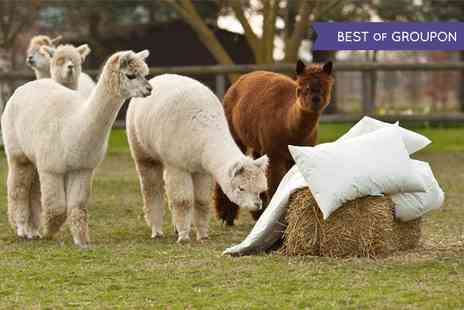 Alpaca Annie -  Two Hour Trek For Two  - Save 52%