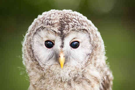 Birds of Prey Centre - Little and large birds of prey experience including a hot drink for one   - Save 77%