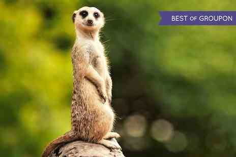 The Animal Experience - Meet the Meerkats  - Save 50%