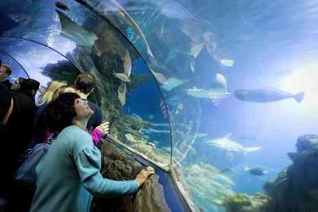 Merlin Events - One ticket to SEALIFE After Dark at London Aquarium on 4th September 2015 including Prosecco on arrival - Save 44%