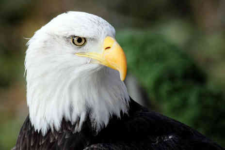 Birds of Prey Centre - Full day eagle handling experience Birds of Prey Centre, Wilstead - Save 70%
