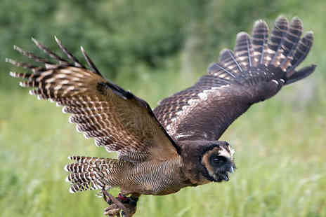 CJs Birds of Prey - Two Hour Owl, Hawk and Falconry Experience - Save 77%