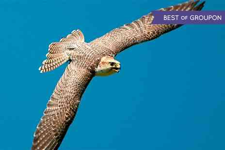Birds of Prey Centre - Three Hour Owl and Eagle Experience for One or Two  - Save 76%