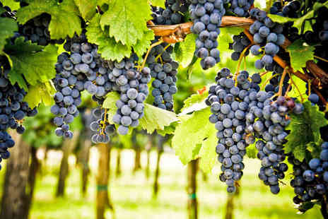 Sedlescombe Organic Vineyard - Vineyard Tour for Two with Wine Tasting and Cream Tea or Lunch - Save 41%