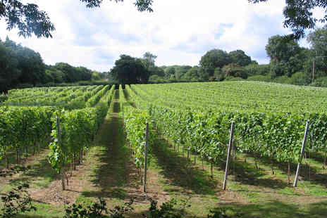 English Oak Vineyard - Two hour vineyard tour for one including a wine tasting  - Save 50%