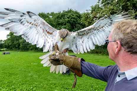 Stockley Birds Of Prey - Halk Walk for One - Save 62%
