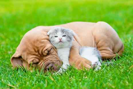 Vet Nurse Direct - Online feline or canine first aid diploma course  - Save 58%