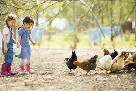 Highfields Happy Hens - Family Farm Day With Lunchboxes Animal Feed and Crazy Golf - Save 64%
