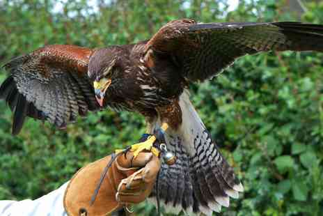 Battlefield Falconry Centre - Two Hour Birds of Prey Experience - Save 67%