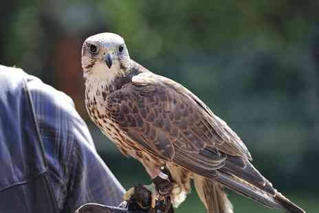 Xtreme Falconry - Bird Flying and Handling Experience for one - Save 70%