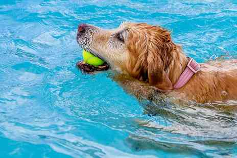 Fit Paws Hydrotherapy - Dog Fitness Swim for One - Save 55%