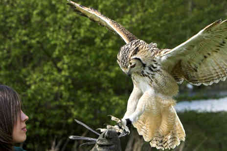 Birds of Prey Centre -  Three hour Feather and Fur owl and reindeer encounter for one - Save 79%