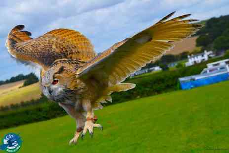 CJ's Birds of Prey - Two hour birds of prey experience with owls, falcons & more for 1  - Save 77%