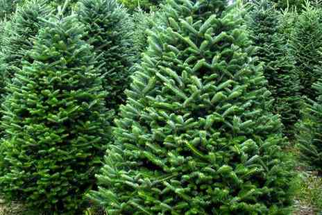 New Farm Christmas Trees - Up to seven fit Fraser Fir Christmas Tree and Refreshments  - Save 0%