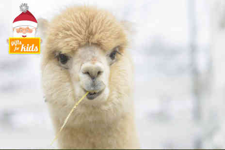 Charnwood Forest Alpacas - Adopt an alpaca to include a meet and greet experience - Save 55%