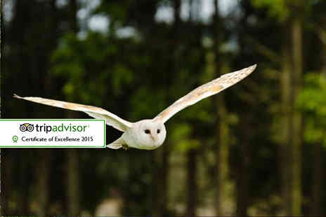 Kirkleatham Owl Centre - Two hour owl experience for two with access  and afternoon tea - Save 62%