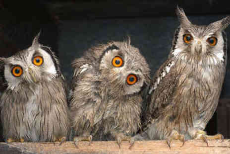 Libertys Owl Raptor and Reptile Centre - Family Entry to Bird of Prey Centre - Save 49%