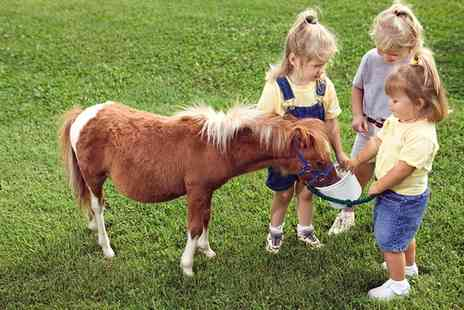Kathbern Stables - Pony Care and Riding Experience For One  - Save 0%