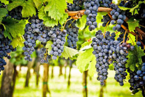 Sedlescombe Organic Vineyard - Vineyard Tour for Two with Wine Tasting and Lunch - Save 41%