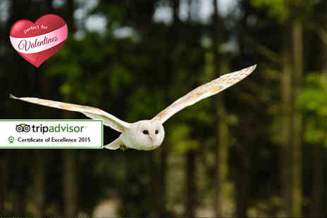 Kirkleatham Owl Centre - Two hour owl experience for two with access and afternoon tea - Save 0%
