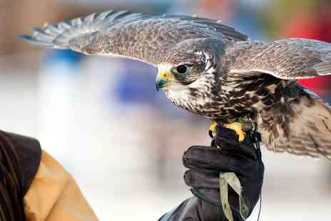 The Falconry School - Three Hour Falconry Experience for Up to Four or a Spectator Experience for One - Save 64%