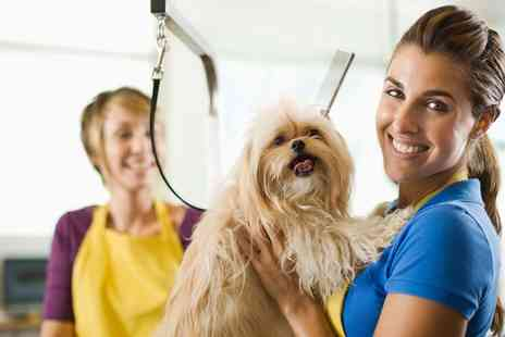 Pet Addict - Online Dog and Cat Grooming Course - Save 94%