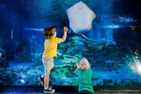 Viator - SeaLife London Aquarium with Thames River Sightseeing Cruise - Save 0%
