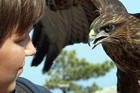 Adventure 001 - Three Hour Falconry Experience  - Save 0%